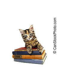 Kitten Old Books 2 - Kitten on old books isolated; series