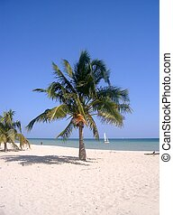 Palmtree - A palmtree on a whitesand beach In the background...