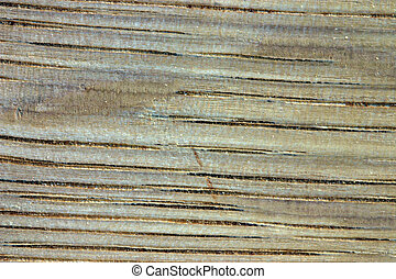 Wood Grain Oak - Macro image of oak grain