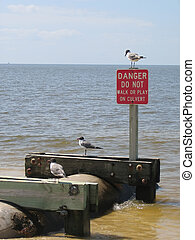 Breakin the rules - Sea gulls on the culvert