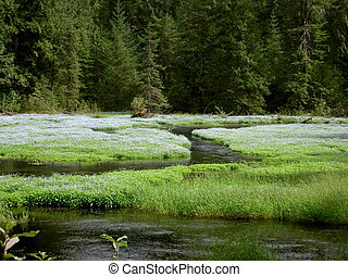 Tranquil Green Glade - Stunning fresh green glade in BC...