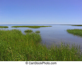 salt marshes on Cape Cod