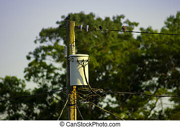 Powerline Transformer - Photo of Powerline Pole With a...