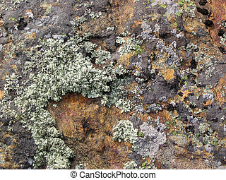 lichen growing on a rock