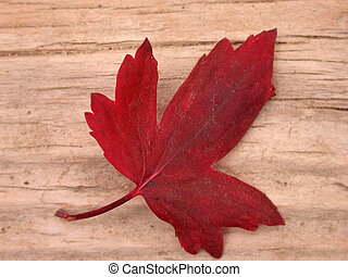 Red Leaf Fall - Lovely red leaf on colorful wood Simple...