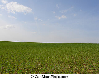 the horizon 2 - blue sky and green grass