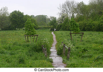 Meadow path - Well used path through meadow.