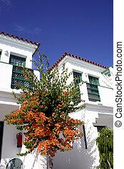 Resort Scenic - Bougainvillea growing on condominium