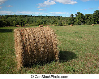 hayfield - bales of hay on an Ontario farm