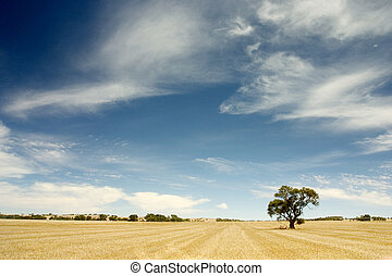 Lonely Tree - Australian Outback