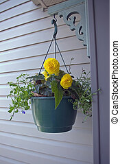 Yellow Begonias - A hanging basket with yellow begonias