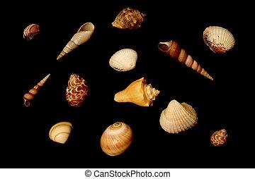 isolated seashells