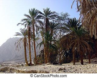 Oasis in deser Sinai Egypt.