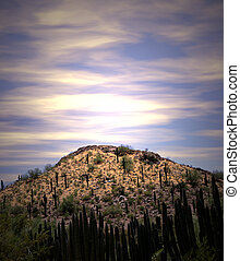 Desert Sunrise - Cacti growing on desert hill. Shot at...