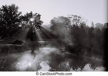 Sun Rays Through Fo - Sun rays through fog