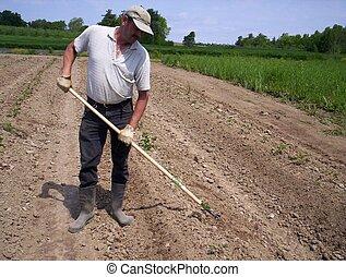 campo, trabalhando, homem