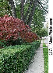 Autumn Sidewalk - A sidewalk in a shady suburban...