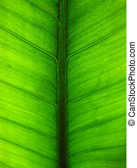 Green leaf - Close-up of a green leaf with visible...