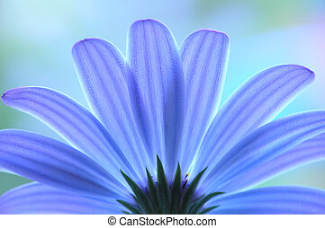 Blue anemone - A perspective shot of a blue anemone
