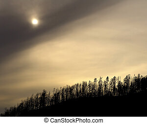 yellowstone treeline - treeline by yellowstone lake against...