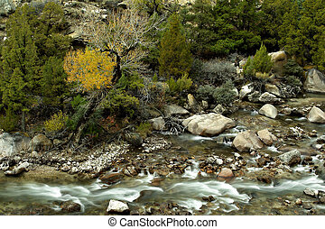shell creek, flowing through the bighorn mountains, wyoming
