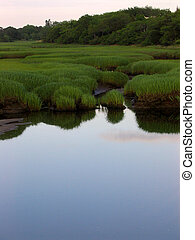 Salt Marsh - a salt marsh on Cape Cod