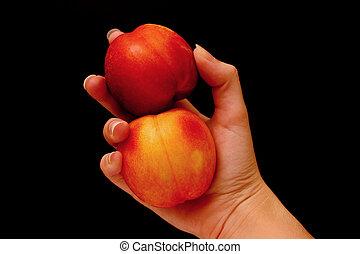 Nectarines - Hand holding nectarines
