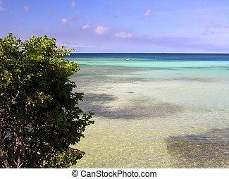 Caribbean Lagoon - Spanish Lagoon Aruba