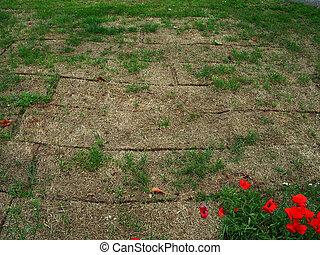 Dead grass - Area of truf - dead.