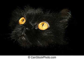 Cat Eyes - Black Cat Looking At His Prey In The Dark -...