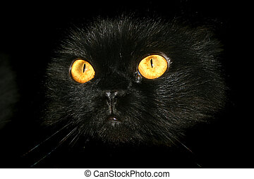 Halloween Kitty 2 - Spooky Eyes - Black Cat