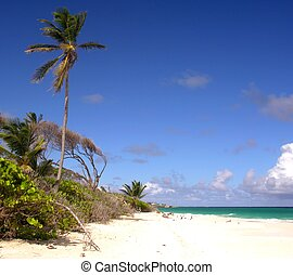 Robinson Feeling - Impressions from Crane Beach Barbados
