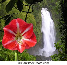 Colors of the jungle - The Trafalgar waterfall of the...