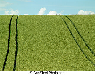 downhill - crop field with tractor tracks