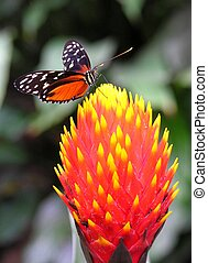 Colors of the nature - A colorful butterfly sitting on a...