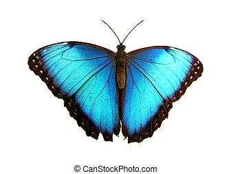 Blue - Isolated blue butterfly