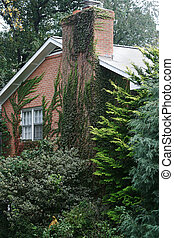 Ivy Covered House - a red brick home in a wooded area,...