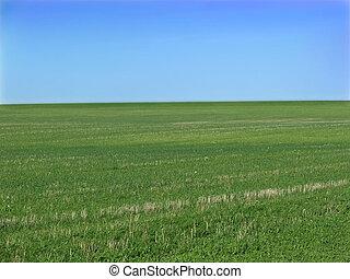 Open field - open green field and blue sky