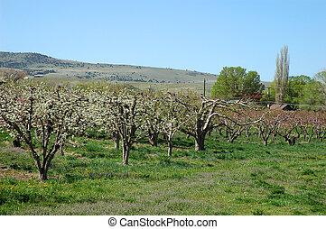 Palisade in Spring - Farm in Palisade, Colorado