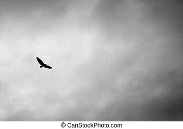 eagle soaring in rain clouds