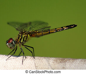 Dragonfly - A macro shot of a dragonfly.