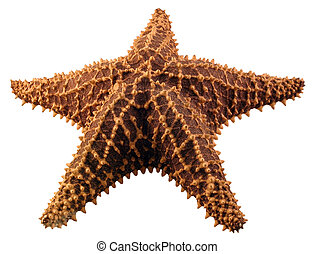 Isolated Starfish - A starfish isolated on a white...