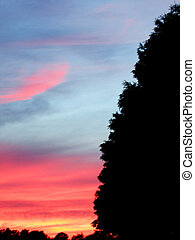 Summer Sunset - Beautiful summer sunset silhouettes trees