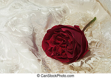 satin lace and red rose 2 - A full blown rose discarded on...