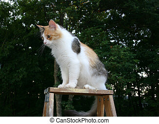 Cat up ladder - A cute calico cat sitting on top of a ladder