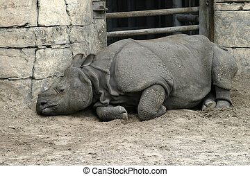 Sad Rhinocerus - A sad looking rhinocerous, confined and...