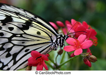 Butterfly with Flowe - Black and White Butterfly on a red...