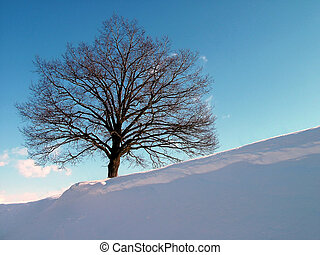 Tree on hill - Alone tree on winter hil