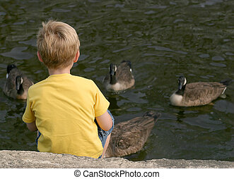 Feed The Geese - A little boy sitting on the edge of a pond...