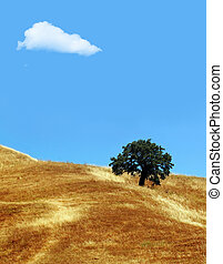 Cloud and tree - California hills